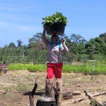 Program Pertanian Harita NickelCiptakan Lapangan Kerja Warga Kawasi Maluku Utara