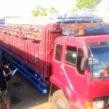 Karantina Ketapang Gagalkan Penyelundupan Puluhan Sapi Bali Tujuan Bekasi