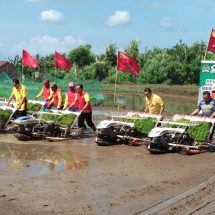 Dua Anggota DPR RI Asal Bali Berlumpur-lumpur Tanam Padi di Subak Pangkung Jajung Baler Bale Agung Jembrana