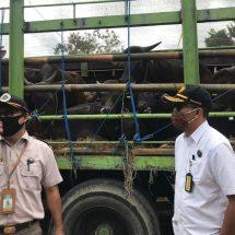 Juni 2020, Permintaan Sapi Potong Bali Capai 21.000 Ekor