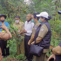 PT SLP Sosialisasi Pertanian Organik di Taro Gianyar