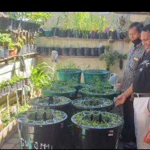 Gunakan EM4 Pak Oles, Hilarius Mali Manfaatkan Pekarangan Untuk Pertanian Organik
