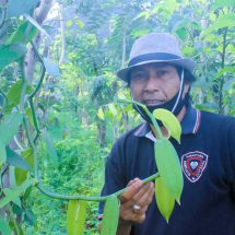 Petani Desa Banyuatis Kembangkan Vanili  Dengan EM4
