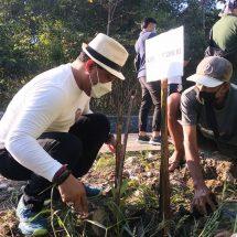 Peringati Hari Lingkungan Hidup Sedunia, Gus Adhi Tanam Pohon di Kawasan Mangrove