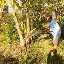 Electrifying Agriculture, Ramah Lingkungan dan Bantu Produktivitas