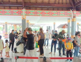 Kabar Gembira untuk Sahabat Satwa, Bali Safari Park Kembali Dibuka!