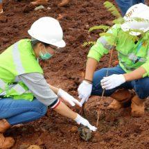 Hari Lingkungan Hidup Sedunia, Harita Nickel Tanam Seribu Pohon di Kawasan Tambang Kawasi