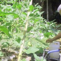 Saat Rumah-Kebun Menyatu Berkat EM4, Mampu Penuhi Kebutuhan Sehari-hari