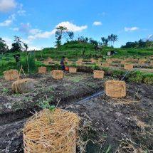 "Berdayakan Potensi Ababi Karangasem, ""Manca Dewata Farm"" Kembangkan Ayam Caru untuk Upacara"