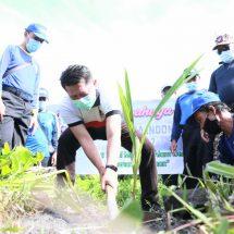 Bupati Suwirta Pimpin Penanaman Pohon Tagana Klungkung