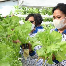 Jaga Ketahanan Pangan, Lanal Denpasar Panen Lele dan Sayuran Hidroponik